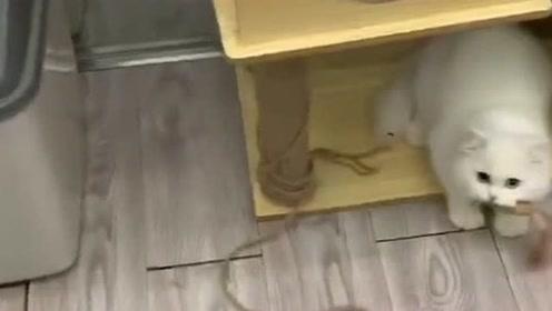 可爱的猫咪,绳子断掉了它自己接回去接着玩,真搞笑!
