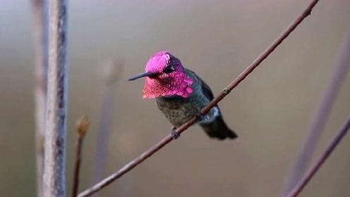 这鸟可以一分钟内变化九张脸,堪比唱戏的老哥!非常的炫酷