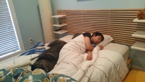 女主人让二哈去叫男友起床,结果十分钟过后,二哈:这床真暖和!