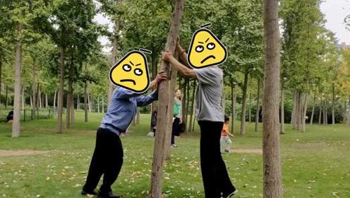 济南两男子为摘银杏果,公园猛踹银杏树,市民:不道德