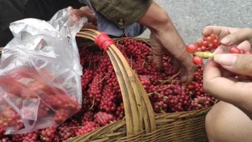 """农村大叔卖""""假葡萄"""",出摊就围一群人,10元一斤还遭哄抢"""