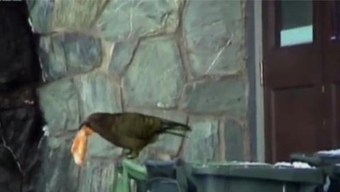 鸟儿翻垃圾桶找吃的,吃完还不忘打包,最后几秒的画风也太魔性了