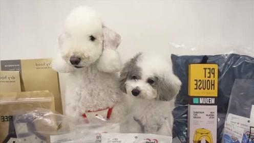 狗狗比人类还娇贵,做造型染发拍艺术照按手印,真是把狗当孩子养