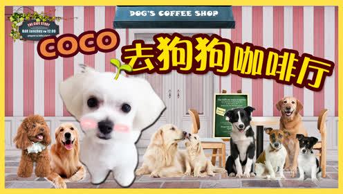 coco第一次去狗狗咖啡馆了!它会遇到哪些可爱的小伙伴呢?