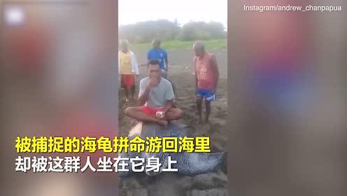 濒危海龟被当玩具骑