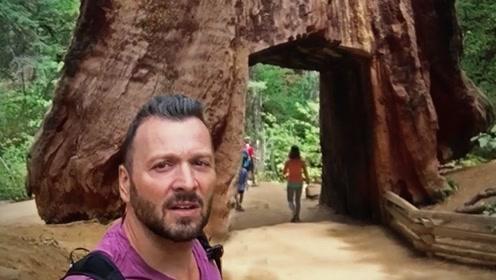"""为吸引游客,千年老树被挖了个洞,一百多年后当地人遭""""报应""""!"""