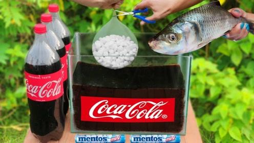将鱼放进可乐水缸中,再倒入曼妥思,你猜鱼是啥反应?太疯狂了!