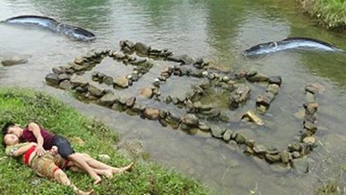 夫妻用石头摆出迷宫陷阱,没一会就有大鱼上钩,直接烤着吃真香
