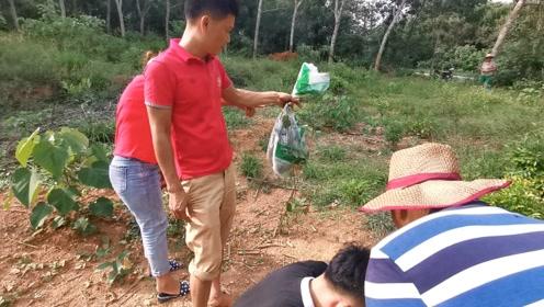 村里亲戚被马蜂蜇伤,隔天带着一帮兄弟报仇,连续铲除两个马蜂窝