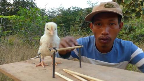 国外牛人艺高人胆大!用小鸡诱饵做陷阱,没一会儿收获一只鹰!