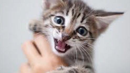 """为什么人类学猫叫时,猫咪也会做出""""回应""""?答案让人难以接受!"""