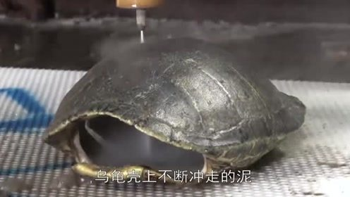 乌龟龟壳究竟有多脏?男子用水刀来了个大清理,真是大开眼界!