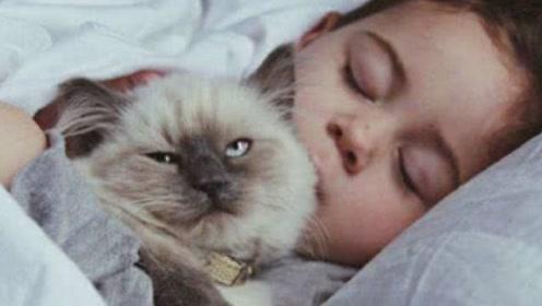 为何猫咪喜欢跟主人一起睡?其中原因你想象不到