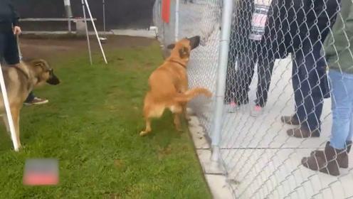 狗狗在收容所遇到主人,可却不是来接它的,他收养了另一只狗狗