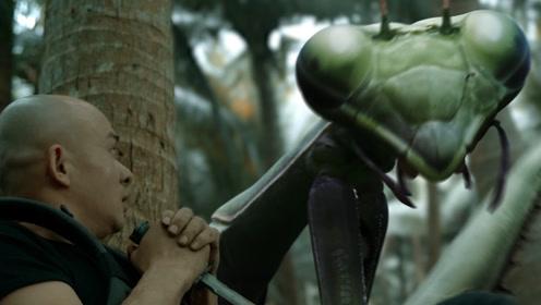 探险小队孤岛寻人,偶遇变异巨大螳螂!