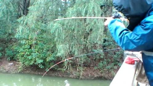 钓鱼:降温了,想不到鱼吃口那么凶,感觉像几天没吃饭了一样