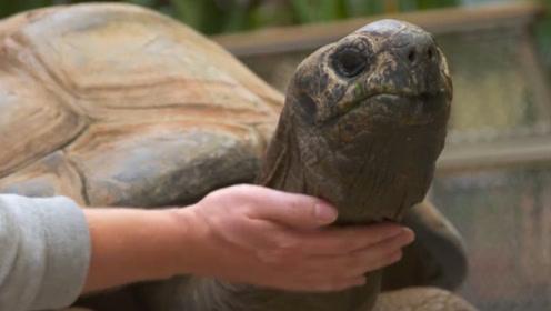 长寿乌龟的保命武器,龟壳内部到底是什么样子,龟:有你才有我