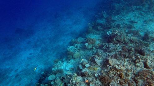 万米海底到底有多恐怖?看过的人,都震惊的说不出话!