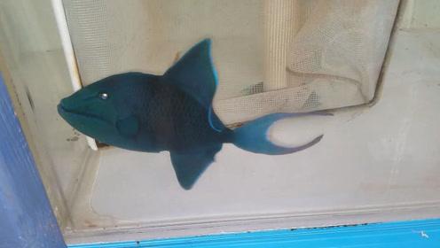从渔民船上收回来的漂亮海水鱼,这条鱼能值多少钱?