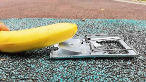 香蕉放到老鼠夹上面,结果会怎样?高清慢动作