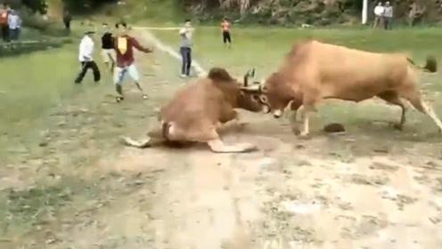 势不可挡的公牛,一招就让对手怯场,实力真是强