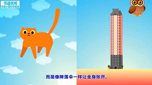 科学人员发现了猫从高空坠落时的什么秘密科普知识快乐英语