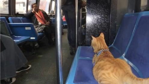 橘猫每天独自乘坐公交,乘客都会等它上车,得知真相惹人落泪!