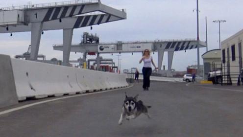 女子救助在港口流浪的狗狗,带回家后,狗狗和大家成为了好朋友