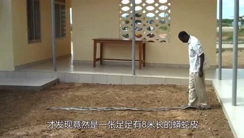 男子散步发现8米长巨蟒皮,卷好带回家拍照后引轰动