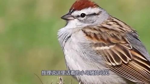 鸟的寿命很短,为什么见不到鸟的尸体?原来都是这样消失的