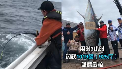 华人第一!中国钓鱼团队钓到一条925斤巨型蓝鳍金枪鱼