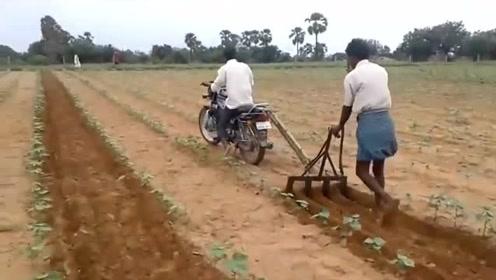 印度人用摩托车代替牛,还挺实用,速度杠杠的