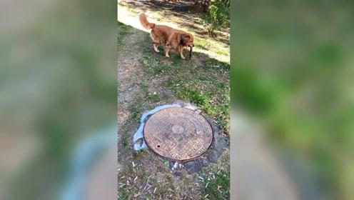 上厕所最听话的狗,上厕所能这样做,你家狗狗能做到吗?