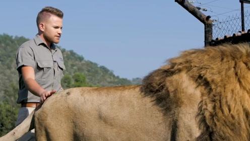 摸了一下雄狮的屁股,不料男子惨遭打脸,雄狮:放尊重点!