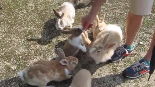 被小兔子包围是什么感受?美女养20只兔子,画面萌翻众人