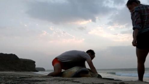 海龟被冲上岸卡在岩石缝里,被路过小情侣发现,下一秒很是感动!
