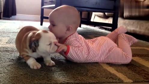 小宝宝和小奶狗,太逗了,两个小家伙