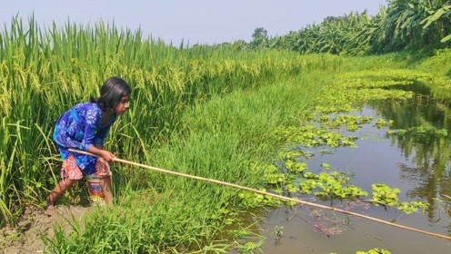 农村小女孩稻田钓鱼,一条鱼竿一个桶,连连上钩真是太爽了