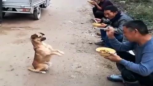 为了生存,流浪狗极力讨好人,看得不是滋味