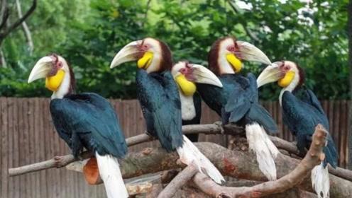 世界最漂亮的鸟类,活生生被人取走头骨买出天价,如今已濒临灭绝