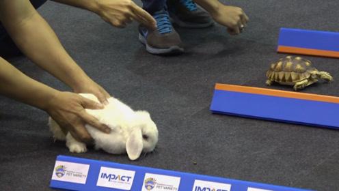 现实中的龟兔赛跑,乌龟还能跑赢兔子吗?结局太出乎意料!