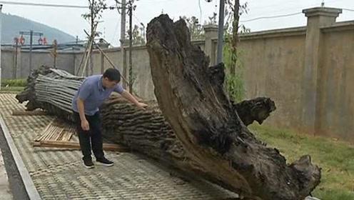 工人建河堤挖出千年乌木:约有十吨重