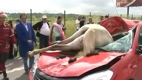 镜头实拍:发狂的野马在道路上乱窜,没想到一头栽进了汽车里