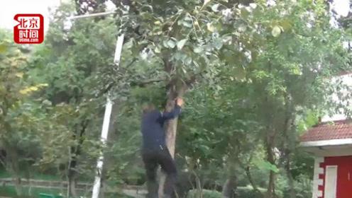 60岁大爷每天公园里爬树健身 还收了不少徒弟