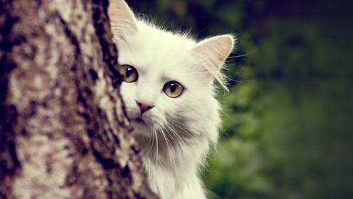 宠物百科:猫的习性是什么?