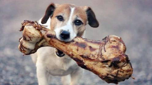 狗狗每次吃骨头都躲起来,男子感觉不对劲,悄悄跟踪后不淡定了