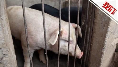 9月CPI同比上涨3% 猪肉价格同比上涨69.3%