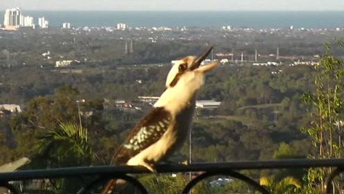 小伙定期给鸟喂食,谁知这次飞过来没食物,鸟群都发飙了