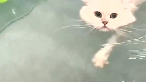 """猫咪会""""游泳"""",猫:我们不想暴露技能!平时只是懒而已"""