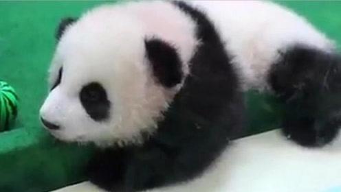 """我国首只被""""退货""""大熊猫,外国人含泪将它送回,原因竟是养不起"""